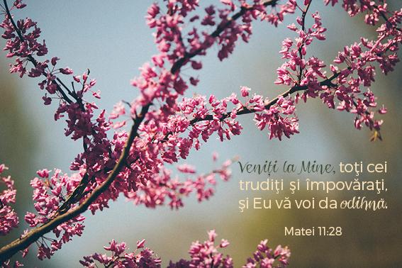 versetesarcina_imagini13