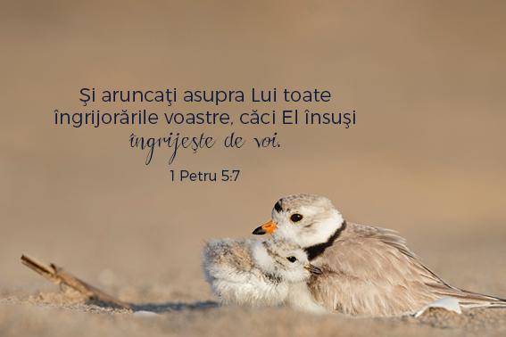 versetesarcina_imagini19